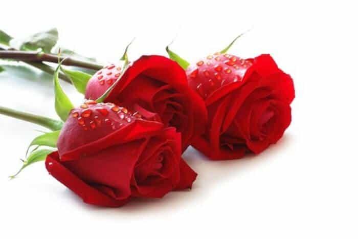 hồng không chỉ đẹp mà lại tốt cho sức khỏe nữa