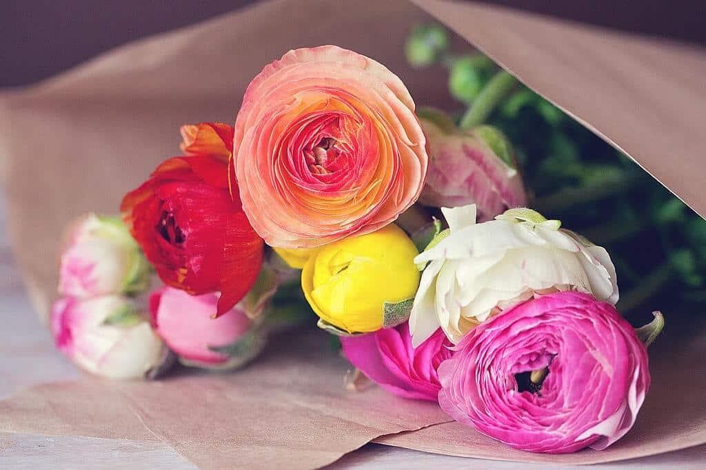 hoa mao lương đep