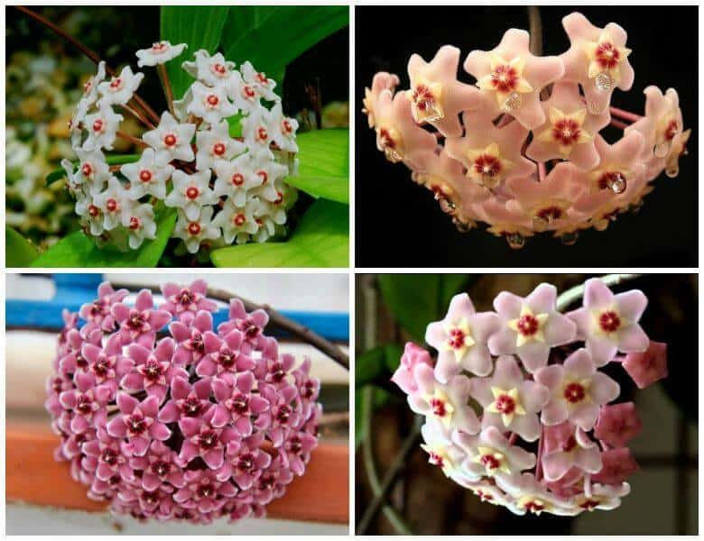 Một số loại hoa lan cẩm cù