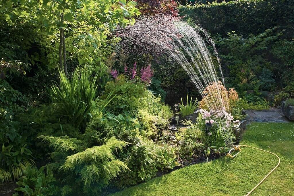 Astilbe - Hoa hạnh phúc trong vườn