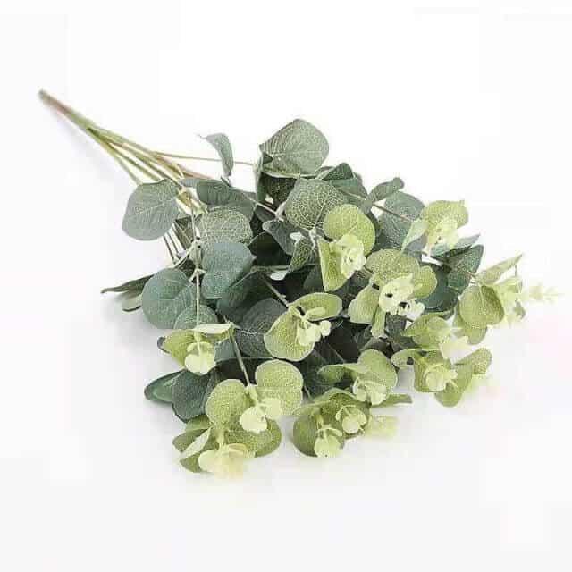 Hoa và lá Mimosa đều được dùng trong trang trí không gian