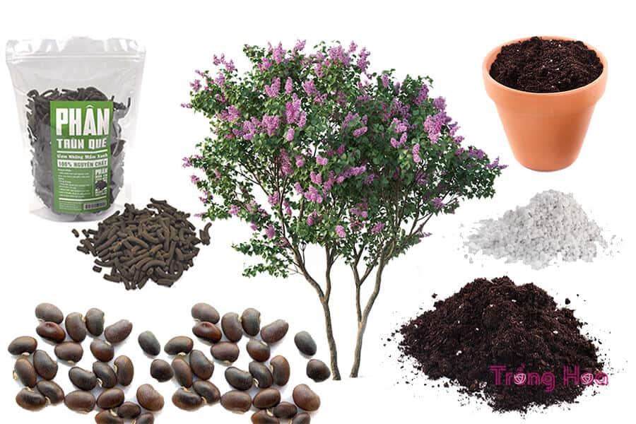 Các dụng cụ cần để trồng hoa tử đinh hương bằng hạt