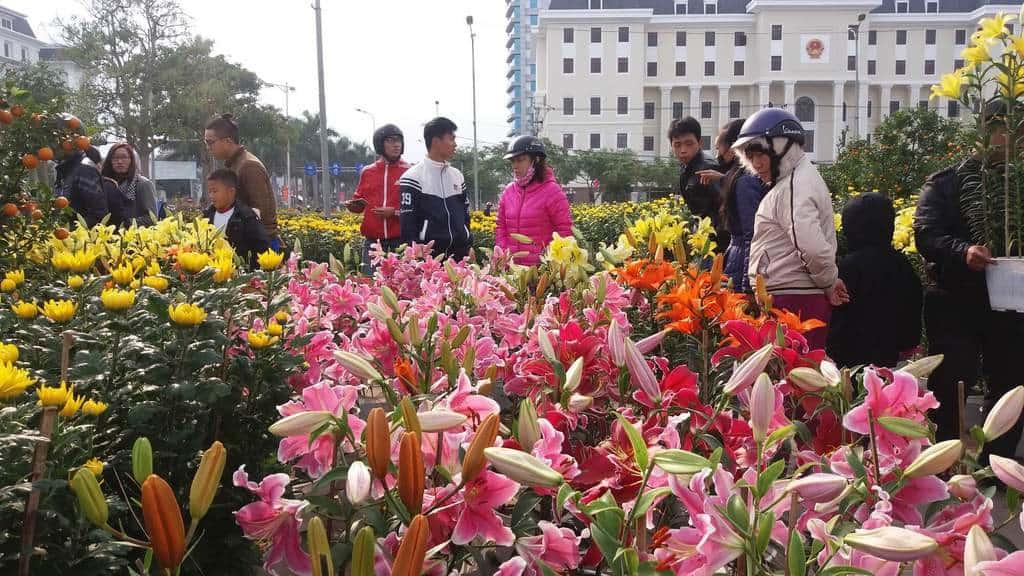mua hoa lily ngày tết