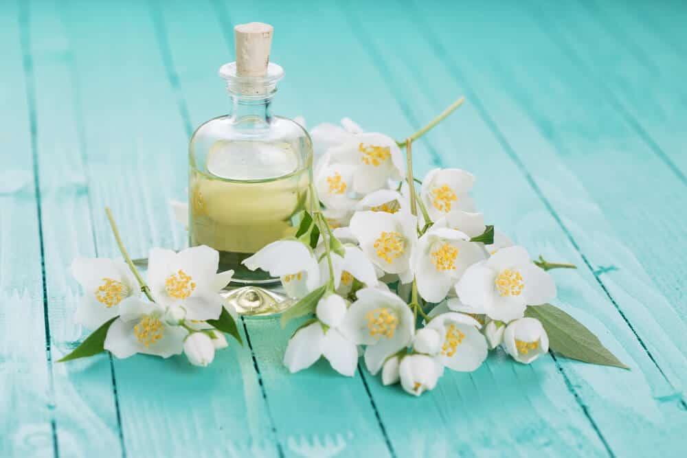 Hoa nhài được chế biến thành nước hoa, tinh dầu