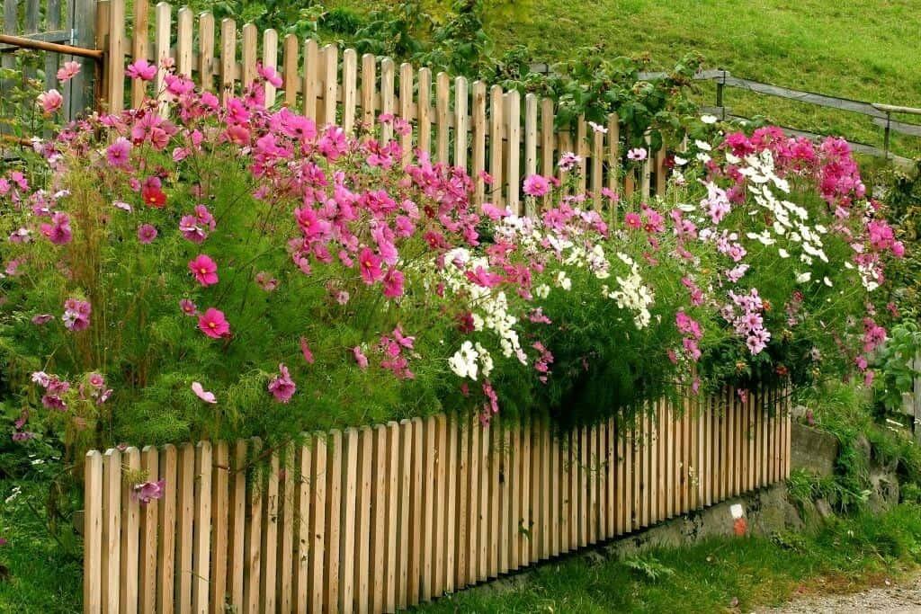 Hoa được trồng tạo cảnh quan và thanh lọc không khí