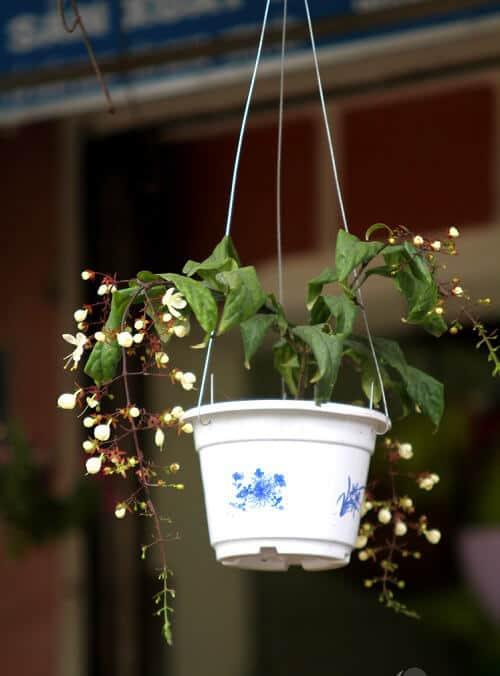Cách trang trí hoa trong nhà