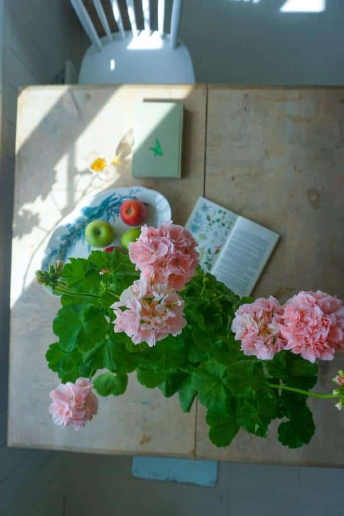 Hoa phong lữ làm giảm căng thẳng
