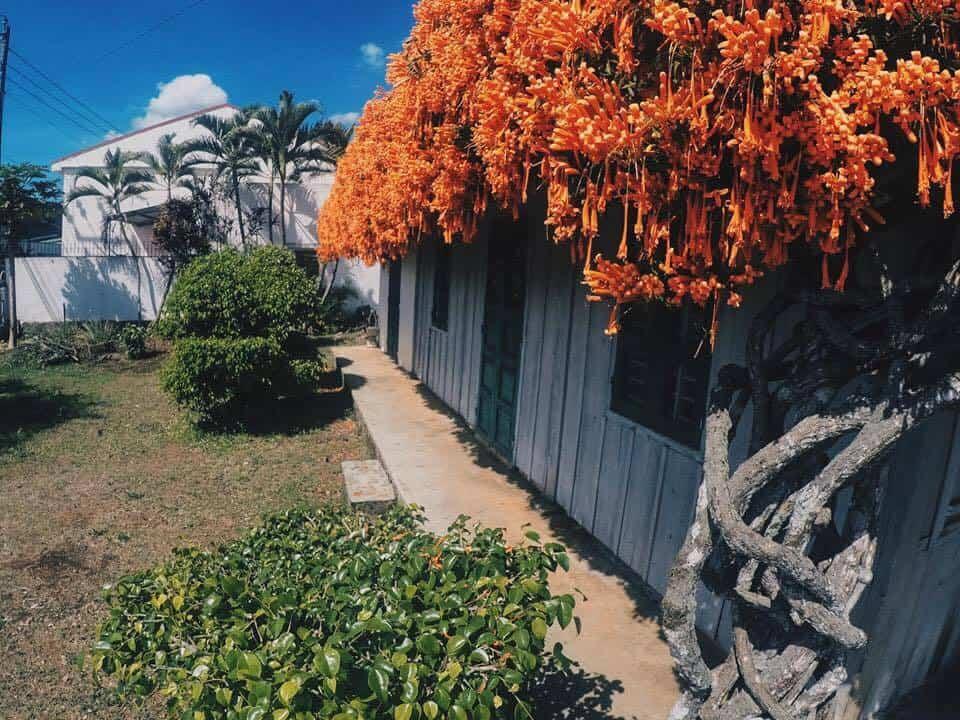 Ngôi nhà được bao phủ bởi giàn hoa chùm ớt