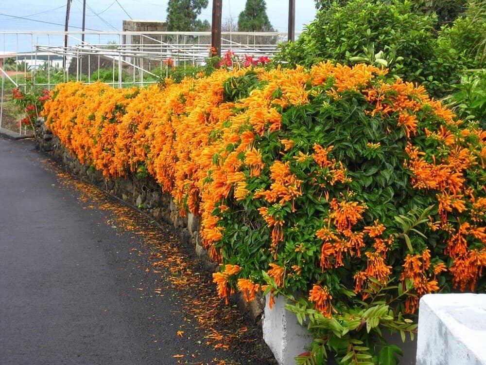 Hoa được ưa chuộng trồng tạo cảnh quan