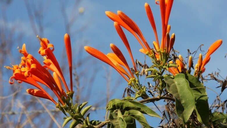 Loài hoa mang ý nghĩa tích cực