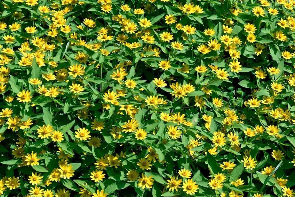 vẻ đẹp của hoa