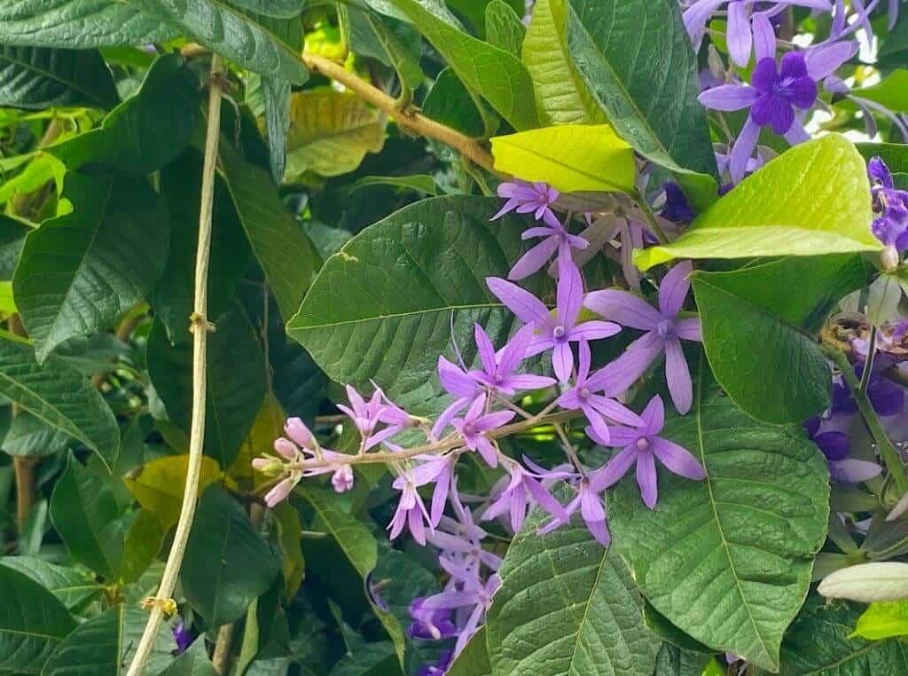 Lá và hoa của cây