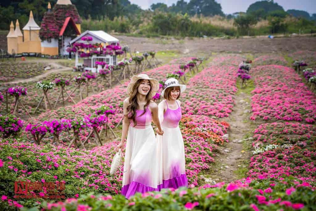 Cánh đồng rộ hoa ngọc thảo ở Hà Nội