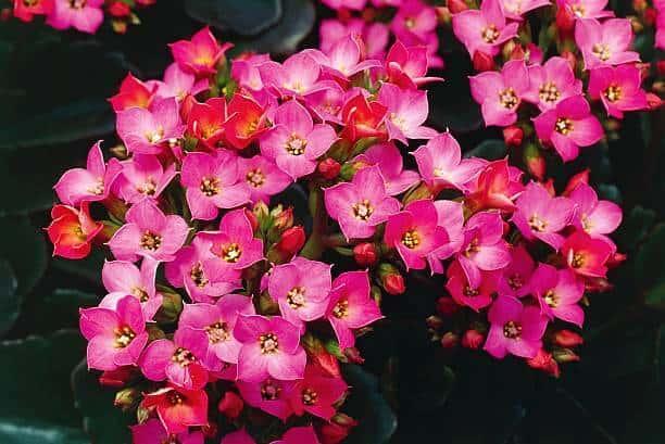 Hoa sống đời