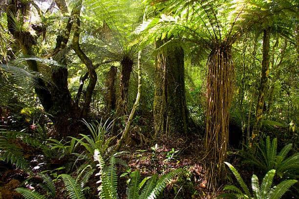 Hình ảnh những cây dương xỉ rừng