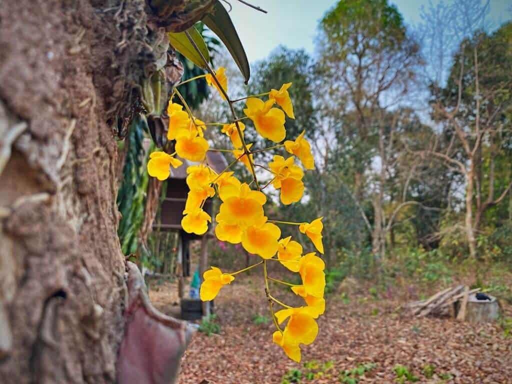 Hoa phổ biến khắp các tỉnh thành
